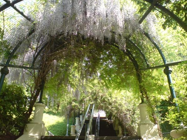 בלוויל: הפארק יפה יותר מהעיר