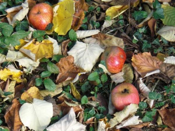 התפוח לא נופל וגו'. בין ערימות החציר