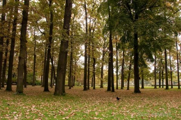 שלכת בפארק פלוראל * צילום: עדו למפרט