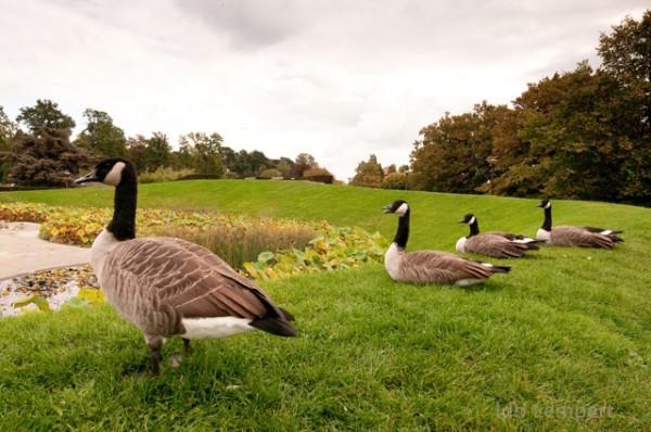 שומרי האגם, פארק פלוראל * צילום: עידו למפרט