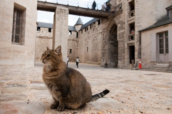 דייר קבע בטירה * צילום: עדו למפרט