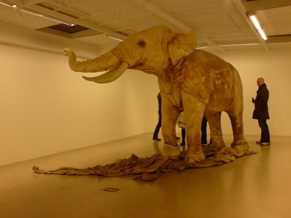 זה פיל. פשוט עור. אותו מיצב מעבר לקיר הגבס