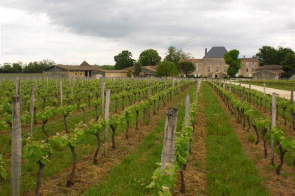 הדרכים הצדדיות יותר / משפחה בדרך היין