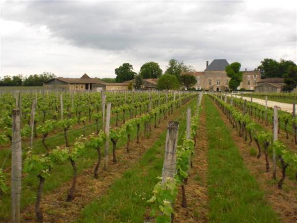 Chateau des Arras. יין נחמד, יופי של כרם