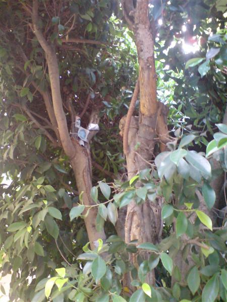 ארמון מקומי (6). ברכת רבנים על בית עץ