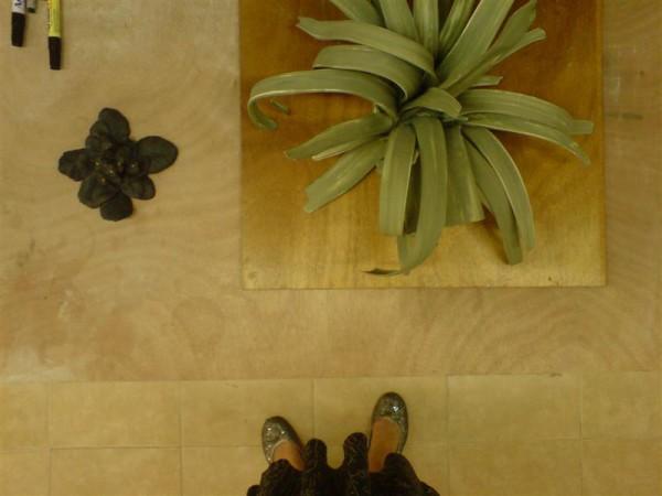 צמח אלוורה וסיגלית שחורה, שניהם מפורצלן. גלי גרינשפן