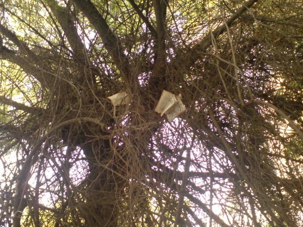 ספרות מקומית. על העץ שצומח ליד בית הספר לאמנויות