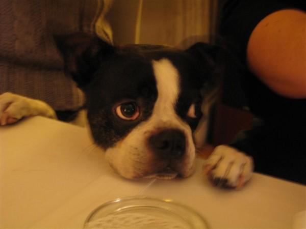 הטרייר של בריידן ולורה, שבא לומר שלום בסוף הארוחה