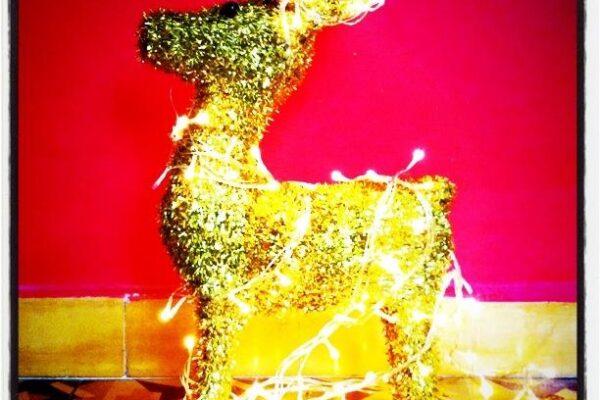 זכות השיבה / מתנות לשנה החדשה / פרויקט מיוחד