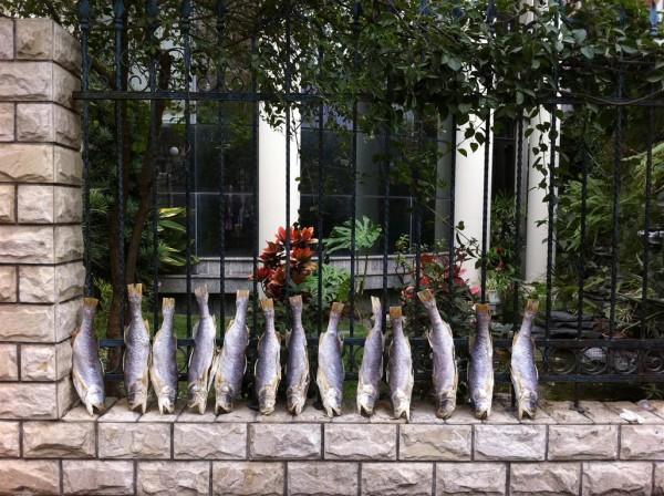 יושבים על הגדר. דגים בגולנג-יו