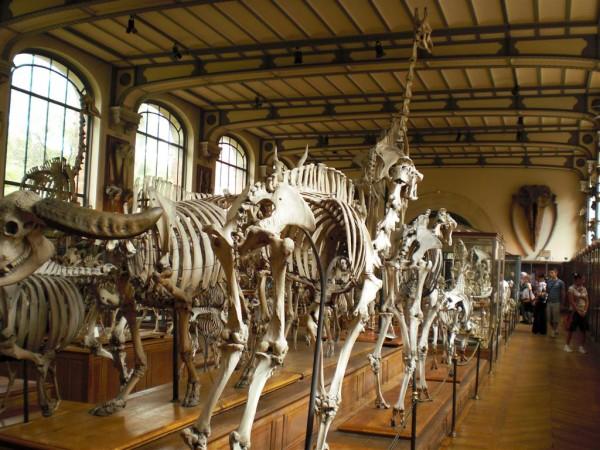 גם הם בנו על הנצח. באגף המאובנים במוזיאון ההיסטוריה והטבע