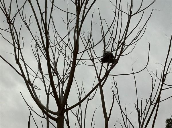 עירום וציפור