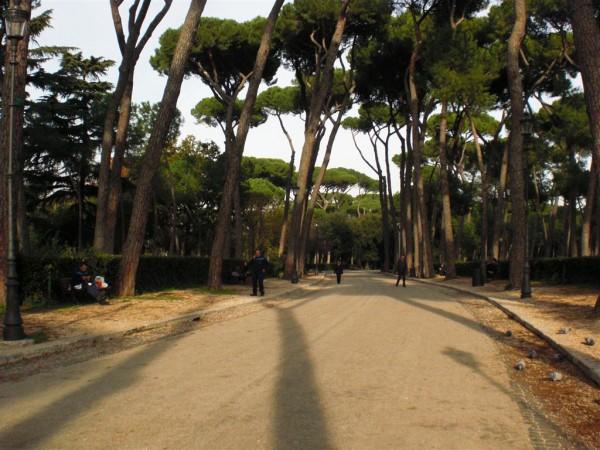 עוד מהעצים האלה, הארוכים וגלוחי הגזע, וצלליהם הארוכים אפילו יותר