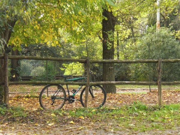 אופניים בשולי הגן. או גלויה ביורו ועשרה