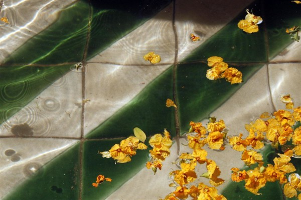 פרחים, ברצלונה