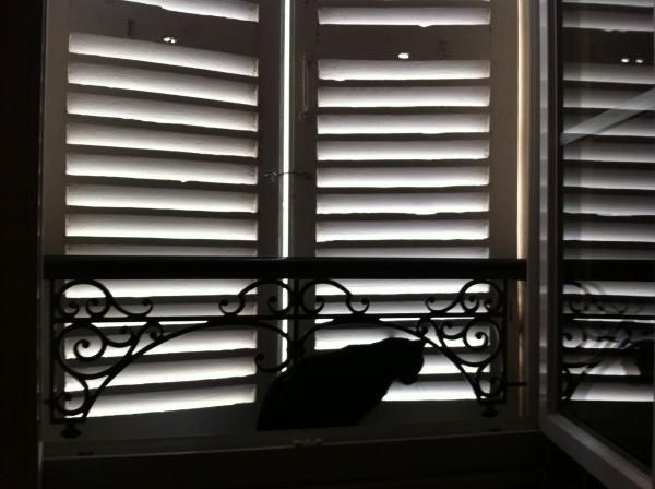 ואי אפשר לסיים בלי פילו אחר, הפיקדון שלנו לקיץ. philou-שאול החתול