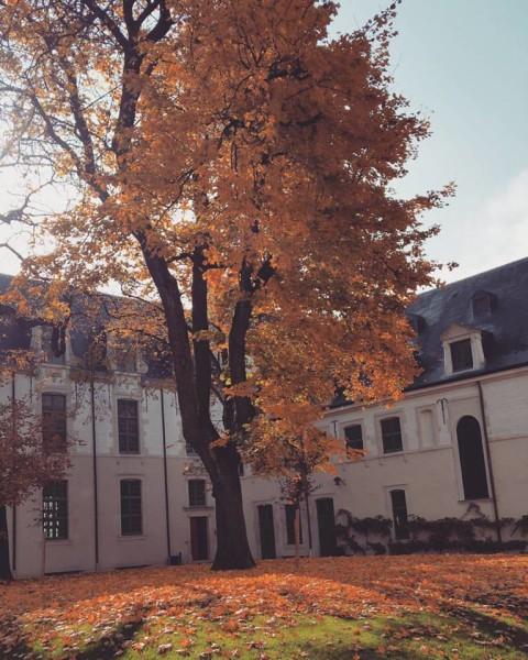 דקת דומייה בחצר הקטנה של המנזר הישועי שהוא היום אוניברסיטה