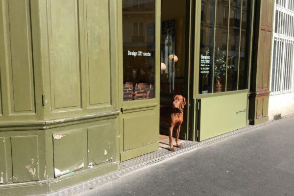 איפה כדאי לגור בפריז? שאלות ותשובות